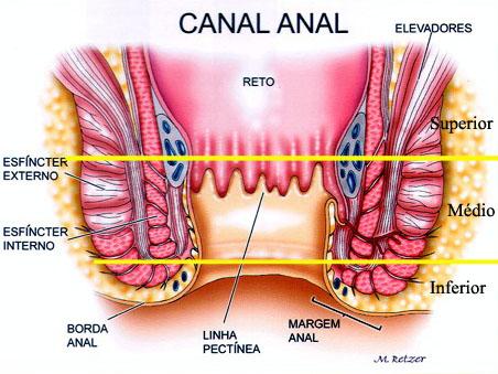 Incontinência Fecal - Dr. Derival Santos - Coloproctologia e ...