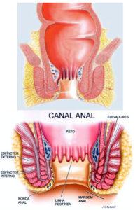 Canal anal e retoo